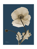 Tonal Poppy on Navy