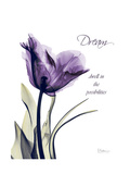 Purple Tulip Dream