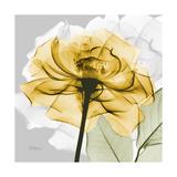 Rose in Gold 4