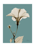Tonal Hibiscus on Blue