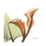 Orange Calla