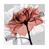 Rose on Gray 2 Giclée premium par Albert Koetsier