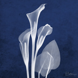 Three Indigo Calla Lilies