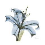 Soft Lily Reproduction d'art par Albert Koetsier