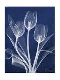 Magnificent Indigo Tulips Giclée premium par Albert Koetsier