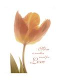 Solo Tulip Colored