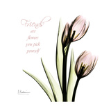 Tulip Friends