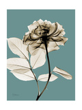 Tonal Rose on Blue