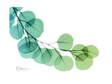 Eucalyptus Green Blue Giclée premium par Albert Koetsier