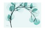 Teal Eucalyptus