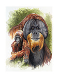 Orangutan Soul