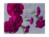 Vibrant Carnations