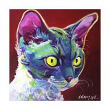 Cat - Devon Rex