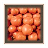 Tomatos Galore