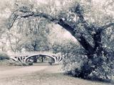 Central Park Gothic