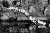 Ash River 11