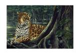 Jaguar by the River