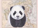 Asian Panda Reproduction d'art par Jane Wilson
