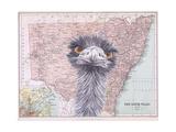 Emeus Reproduction d'art par Jane Wilson