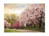 Asian Cherry Grove
