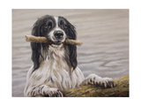 Border Collie with Stick in Lake