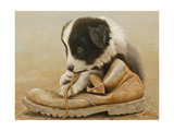 Border Collie Puppy Eating a Boot