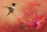 Hummingbird and Peach Hibiscus