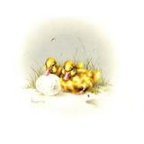 Ducks and Egg