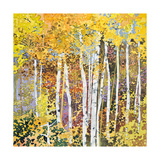 Autumn Birches III