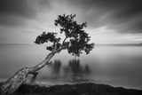 Water Tree 11 BW