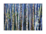 Mystery of Trees-Birches