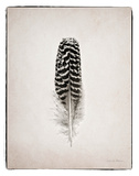 Feather I BW
