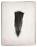 Feather III BW