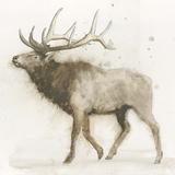 Elk v.2 Reproduction d'art par James Wiens