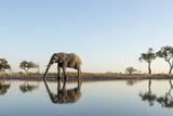 Botswana  Chobe NP  African Elephant at Water Hole in Savuti Marsh