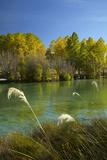 New Zealand  South Island  Mackenzie Country  Ohau River in Autumn