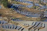 Rice Terraces  Yuanyang County  Honghe  Yunnan Province  China
