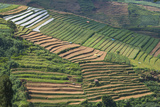 Terraces on Mountain Side  Sindoro-Sumbing Valley  Java  Indonesia