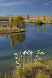 New Zealand  South Island  Mackenzie Country  Loch Cameron in Autumn
