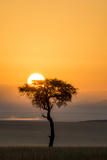 Kenya  Maasai Mara  Sunrise Behind Balanites Tree and Hot Air Balloon