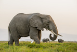 Kenya  Amboseli National Park  Elephant