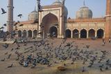 Pigeons in Mosque  Jama Masjid Mosque  Delhi  India
