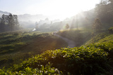 Tea Plantations and Road  Munnar  Western Ghats  Kerala  South India