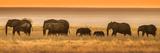 Etosha NP  Namibia  Africa Elephants Walk in a Line at Sunset