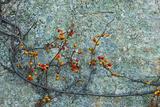 Berries and a Rock at Elmwood Farm in Hopkinton  Massachusetts