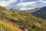 Vineyards Near Bolzano  Trentino-Alto Adige  Suedtirol  Italy