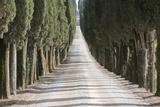 Europe  Italy  Tuscany  Tree Lined Road