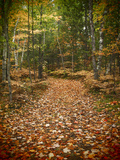 USA  Michigan  Upper Peninsula Leaf Lined Trail in the Hiawatha NF