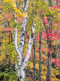 Michigan  Upper Peninsula Hardwood Forest in Ontonagon County in Fall