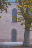 Germany  Rheinland-Pfalz  Speyer  Domgarten  Cathedral Park  Fog